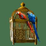 Le Marchand et le Perroquet , conte soufi de Rûmî